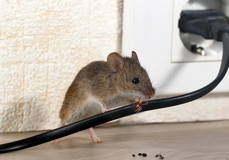 last van muizen in huis